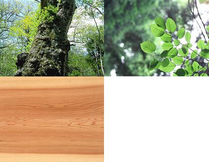 木のパターンは様々